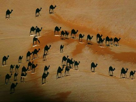 camel-shadows-resized