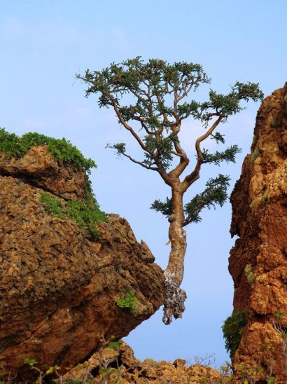 lone-tree-grow-where-youre-planted-you-may-be-the-only-shelter-for-miles2