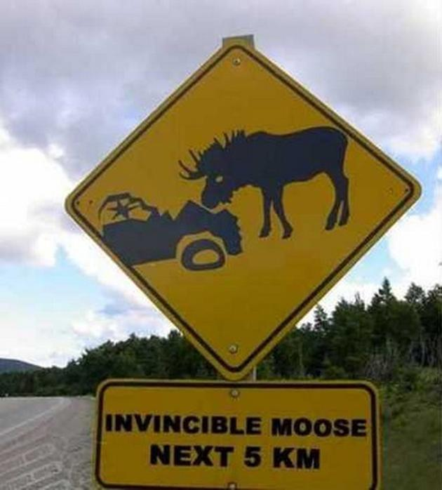 invincible-moose-sign