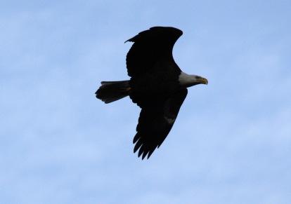 eaglesoar2