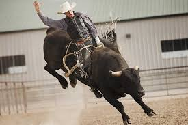 bull-riding.jpg